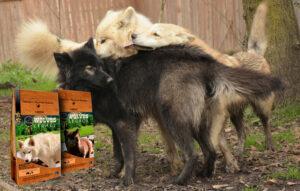 varios-lobos-2