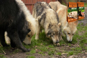 varios-lobos-5