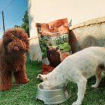 Ana y sus perros
