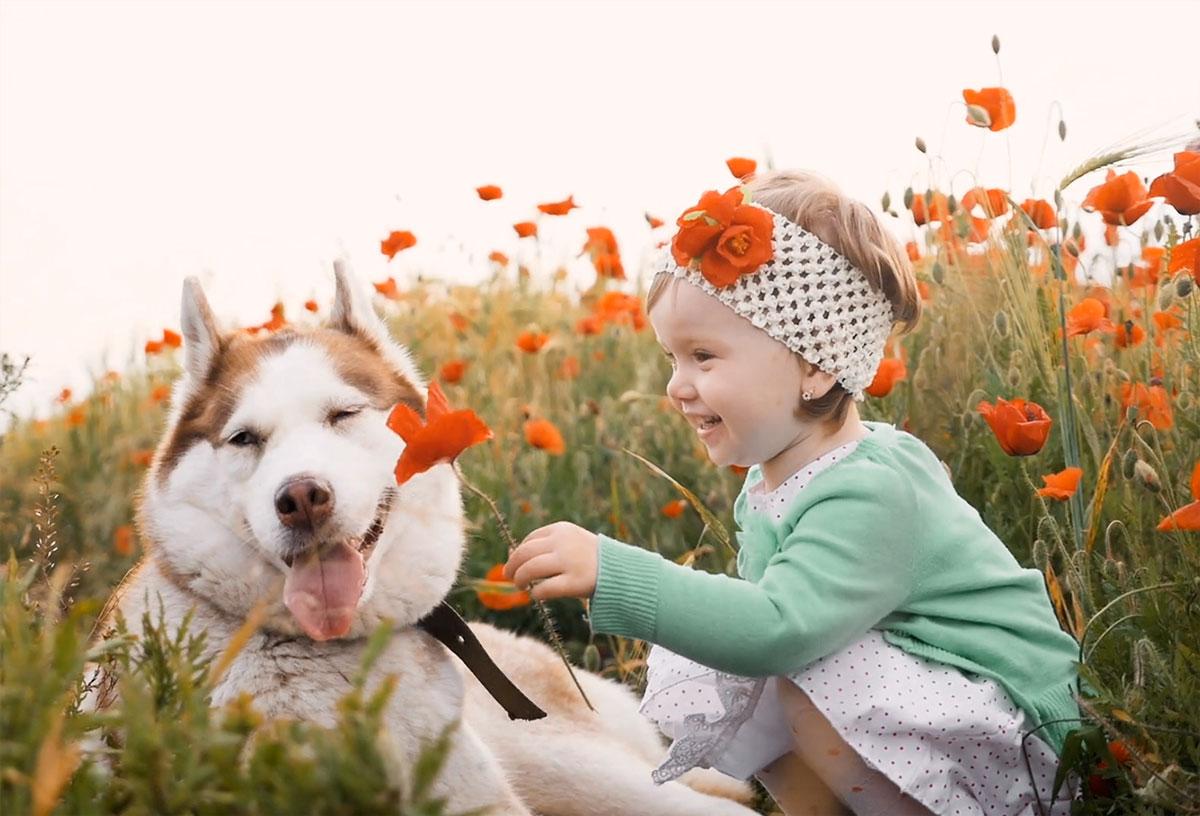 portada2 - niña con husky